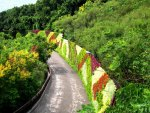 The floral wall displaying Trail