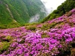 Mountain flowers