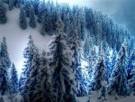 White Snow Blanket over Mountain of Trees
