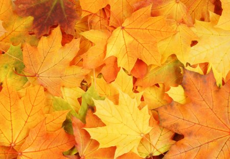 Autumn Leaves - autumn, photography, autumn leaves, nature, fall, beauty, beautiful, lovely, leaf, pretty, leaves, autumn colors