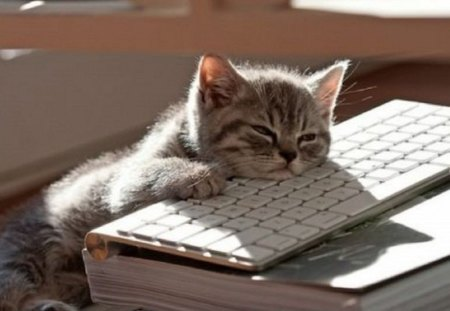 How I look right now ? - cute, kitty, on a keyboard, cats, animals