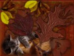 autumn leaves and kitten