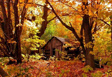 autumn cabin wallpaper desktop - photo #12