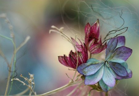 Composition - colors, painted, soft, flower