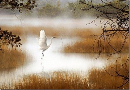 a dance of the Stork - autumn, beautiful, water, painted, stork