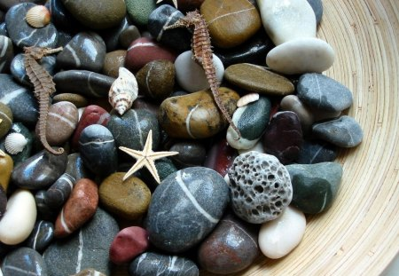 Aquatic Stones - stones, water, rocks, aquatic, seashells, nature