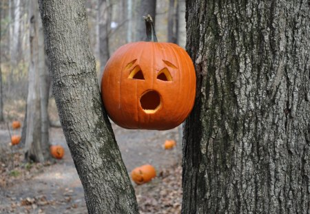 HELP !!!! - autumn, forest, horror, pumpkins, trees