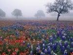 Foggy Field of Wildflowers