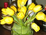 EVENING WITH TULIPS