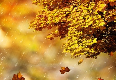 Fall Rain Shower - fall, autumn, maple, falling, wind, breeze, blur, abstract, tree, leaves, gold, shower, rain