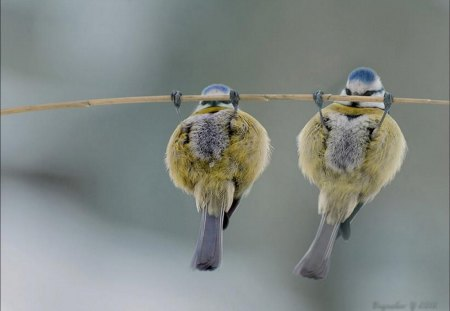 pullup birds - abstract, funny, animals, birds