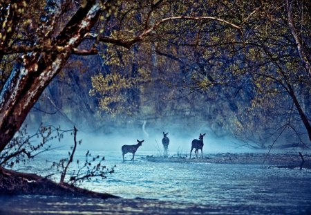 Deer on the River - image, paisaje, multicolor, wallpaper, creeks, forests, paisage, rivers, moonlit, widescreen, paysage, life, three, arc, trees, peisaje, panorama, water, arch, multicolored, moonlight, photoshop, white, landscape, colorful, scenic, brown, trunks, deer, picture, photography, leaves, green, scenery, blue, animals, night, photo, lakes, view, foam, colors, maroon, leaf, paisagem, plants, colours, nature, branches, natural, scene