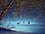 Deer on the River