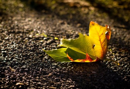 Leaf - pretty, fall, autumn, lovely, autumn leaves, beautiful, leaf, leaves, autumn colors, beauty, nature, autumn leaf, road, alley, street