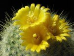 Prickly and Pretty