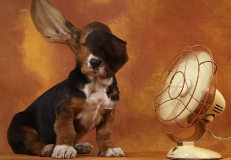 The Basset Hound and the Breeze - basset, fun, fiel, basset hound, lindo, animal, natureza, fan, blowing ears, cachorro