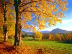 Colorful Vermont