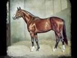 Northern Dancer - Horse F2