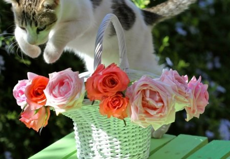 troubles - trouble, cat, roses, basket, vase