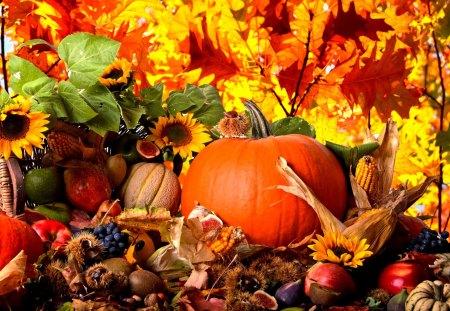 AUTUMN HARVEST - autumn, harvest, pumpkin, grapes, corn, sunflowers