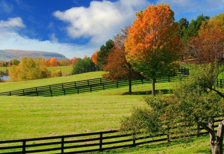Autumn Pastures - fall, autumn, green, fences, farms, color, trees