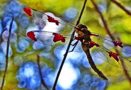 STAINED GLASS - wings, dragonflies, gardens, trees, outdoors, insects