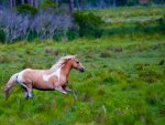 *** Galloping horse in the meadow ***