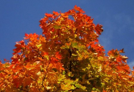 Autumn 2012 - autumn, tree, herbst, leaves, 2012