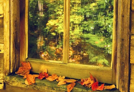 Autumn window - colorful, path, forest, park, delight, autumn, wooden, nice, nature, trees, fall, beautiful, lovely, foliage, pretty, window, falling, view, leaves