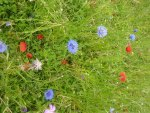 Wild Flowers in a Grassy Field