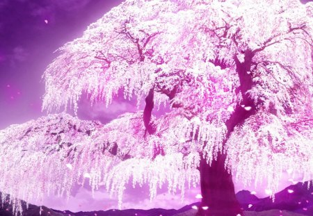 Cherry Blossom Tree Akira Anime Background Wallpapers On