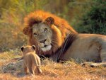 Father and Son, Africa