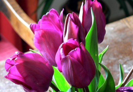 Spring Sublime♥ - lovely, spring, electric pink, green, purple, love, bright, forever, flowers, nature, tulips, light