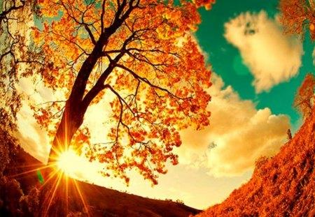 Beautiful Autumn Scene Other Nature Background