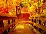 Bridge At Fall