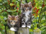 Kittens on fence