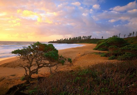 A Perfect View - sea, shrubs, clouds, a perfect view, view, ocean, beach, sky, sunset, perfect