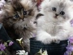 cute kittens in the watering can