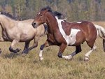 *** Amazing galloping horses ***