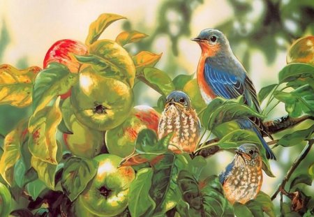 CALIFORNIA BLUE BIRDS IN THE APPLE TREE - apple tree, garden, california blue bird, bird