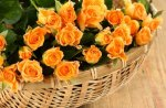 BASKET OF YELLOW