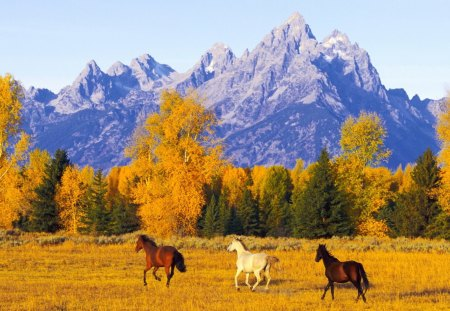 Horses in Autumn Forest - autumn, horses, nature, forests