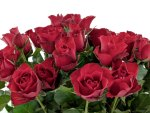 *** Bunch of red roses ***