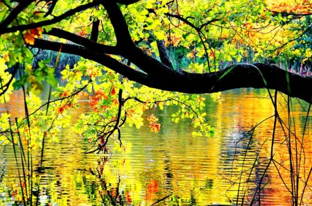 Autumn branches over the pond - fall, pretty, colorful, autumn, glow, sunny, shine, beautiful, foliage, mirrored, nice, reflection, forest, lovely, sunlight, golden, colors, trees, lake, pond, nature