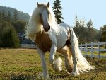 ***  A horse with a long mane and tail ***
