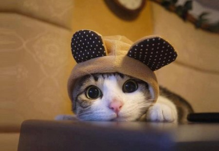 Cute Kitty Sporting Bunny Ears - brown, ears, playful, bunny, cats, animals, hat