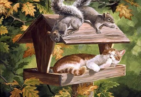 DO NOT DISTURB ! - autumn, squirrel, feeder, cat