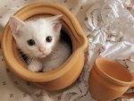 *** Amazing kitty ***