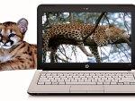 Leopards & Laptop