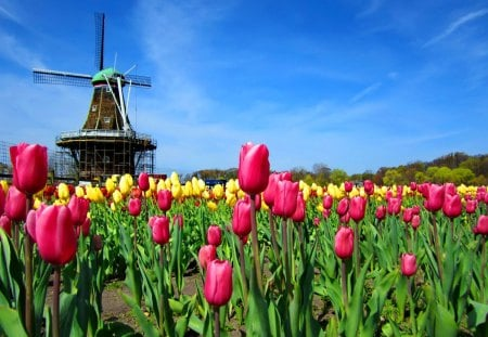 A windmill - red, pretty, colorful, windmill, mill, yellow, beautiful, clouds, holland, nice, green, flowers, tulips, harmony, lovely, wind, greenery, sky, delicate, freshness, nature